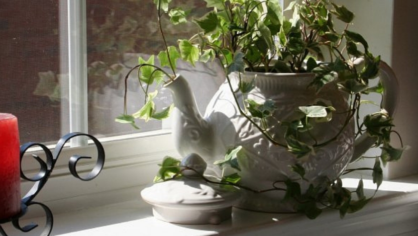 How to Make a Teapot Planter
