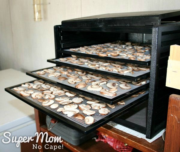 Put trays full of sliced mushrooms in the dehydrator