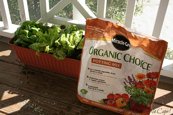 Organic Potting Soil Mix