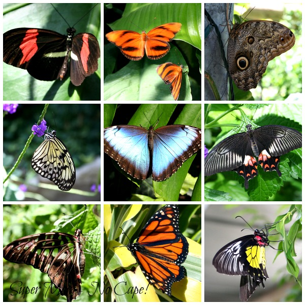 Butterfly Collage