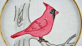 Cardinal Embroidery Pattern with pencil crayon shading