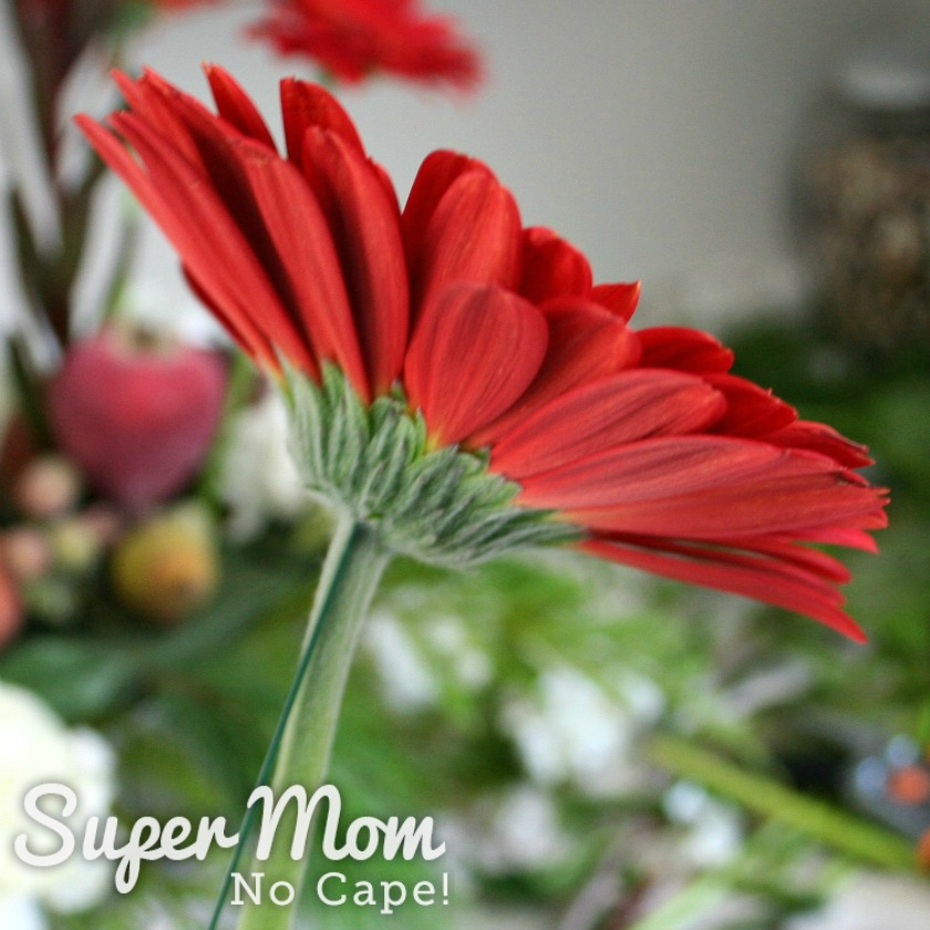 Demonstrating adding a support wire to the red gerbera